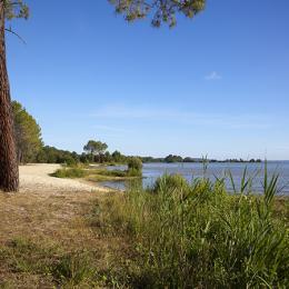 La plage du lac à 60 mètres, ombre sous la pinède, eaux claires, Bonheur... - Chambre d'hôte - Biscarrosse