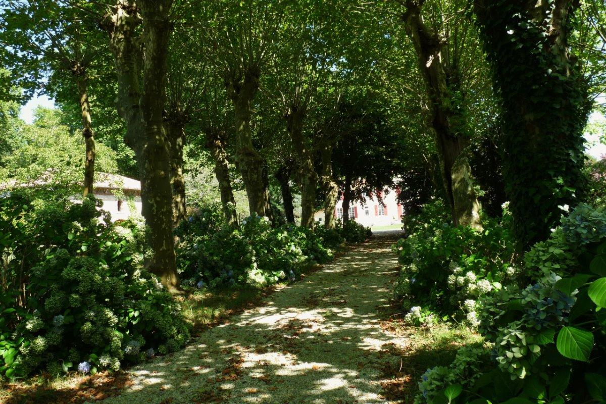 allée d'arrivée - Location de vacances - Peyrehorade
