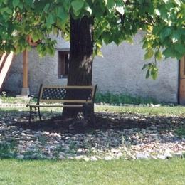 A l'ombre bienfaisante du grand catalpa au Domaine de la loge - Chambre d'hôtes - Montverdun