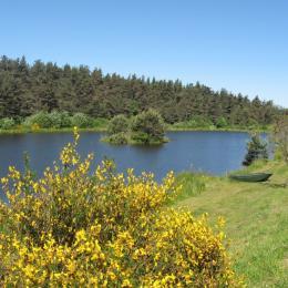 le lac et le chalet bois en arrière plan ... - Location de vacances - Le Chambon-sur-Lignon