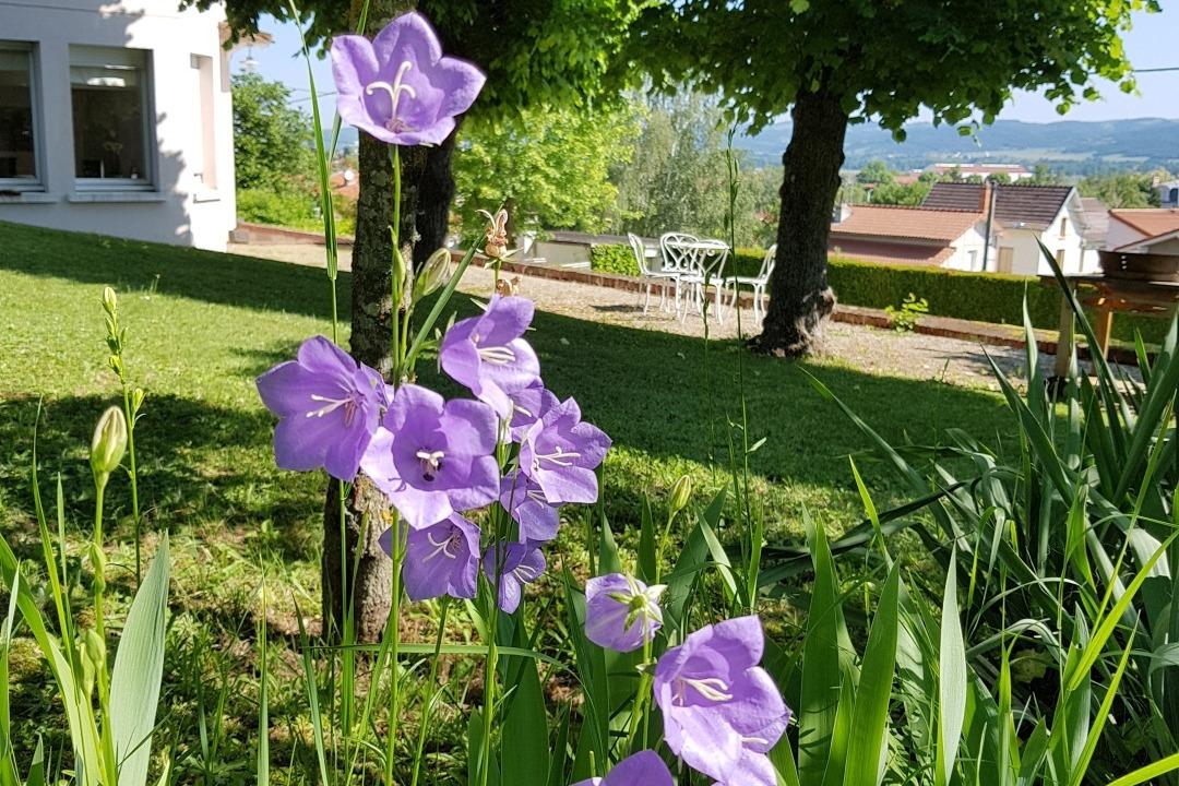 Clos des Campanules - de belles campanules  - Chambre d'hôtes - Brioude