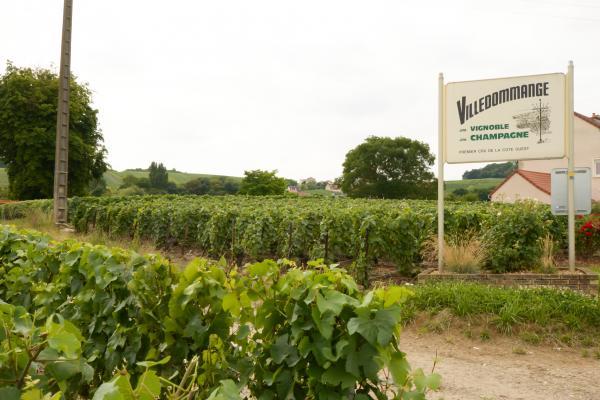 Villedommange, petite village viticole au coeur des vignes - Location de vacances - Ville-Dommange