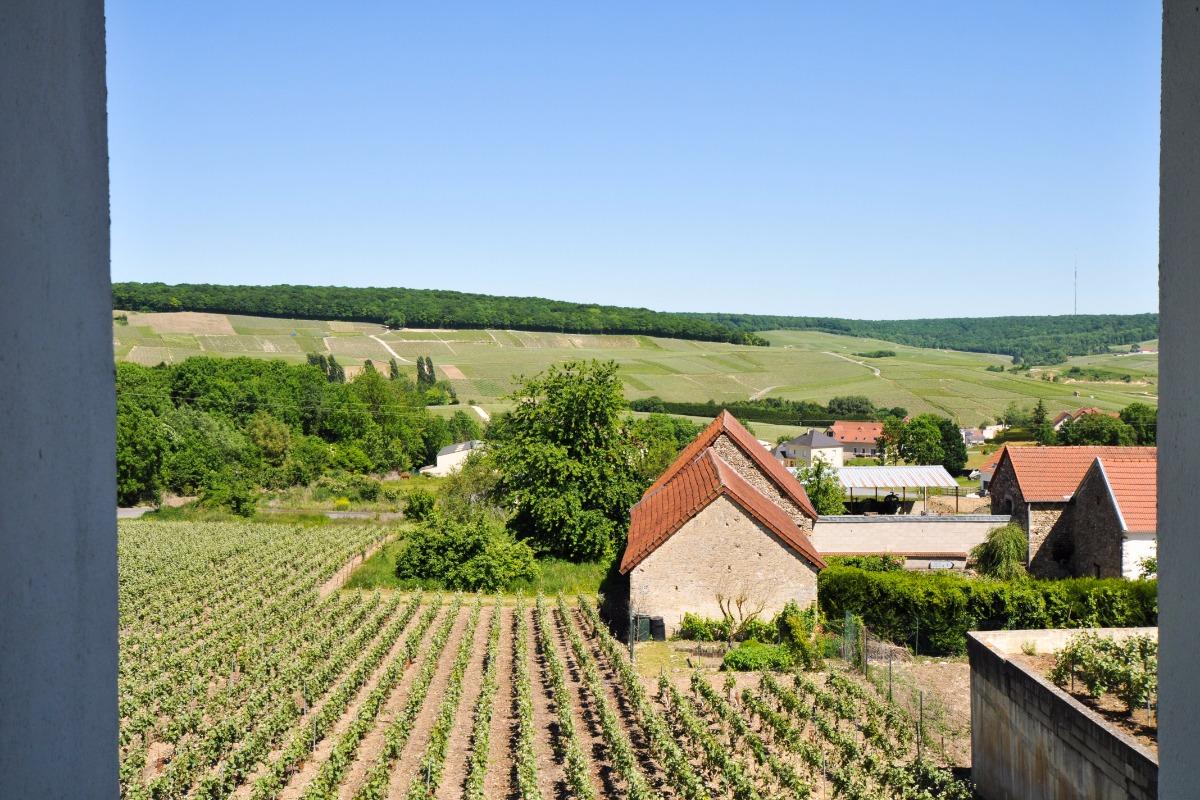 Au coeur du vignoble en plein nature - Location de vacances - Fleury-la-Rivière