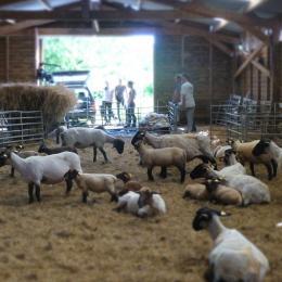 Une halte nocturne dans notre ferme vous permettra au petit matin, si vous le souhaitez de faire connaissance avec nos animaux...Traversez la rivière du Vincin, tendez l'oreille, la grande famille de laine n'est jamais très loin   - Chambre d'hôtes - Vannes
