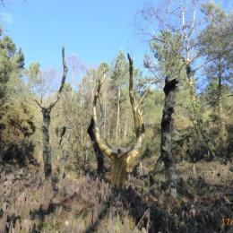 l'arbre d'or   du  val sans retour dans la foret de Brocéliande - Location de vacances - Mauron