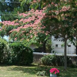jardin - Chambre d'hôtes - Plouharnel