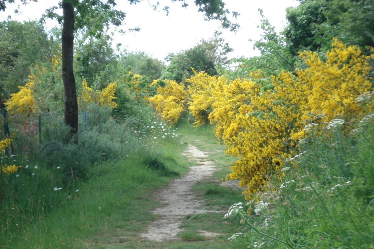 Chemin de randonnée au départ de la résidence - Location de vacances - Pénestin