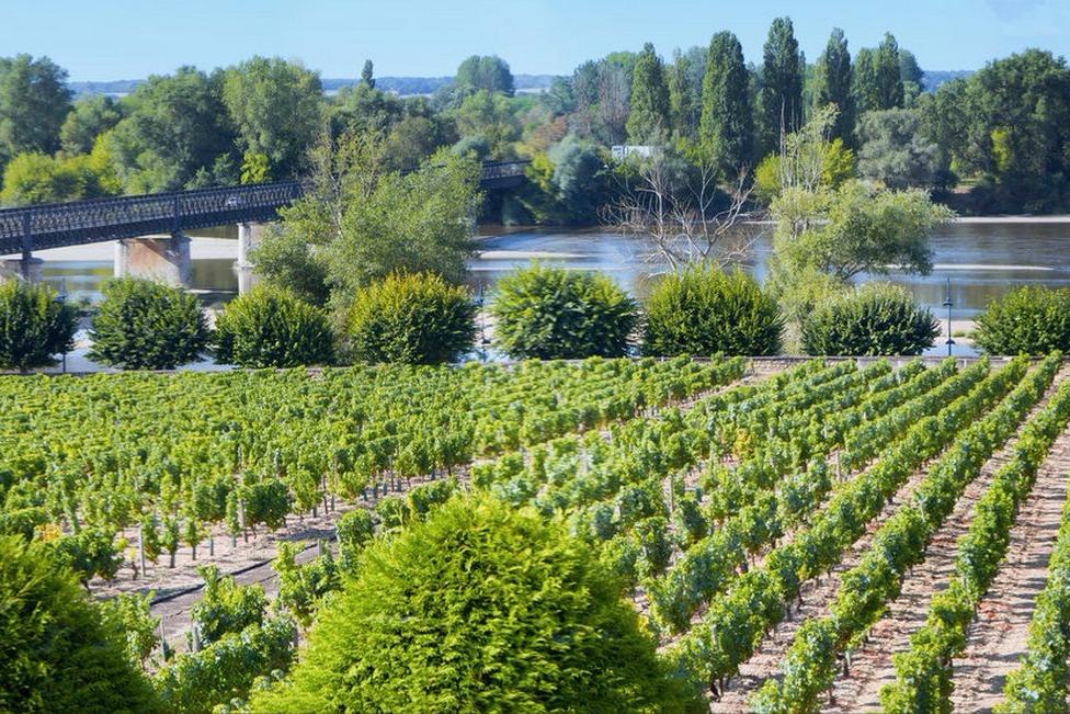 vue de la fenêtre de la cuisine - Location de vacances - Pouilly-sur-Loire