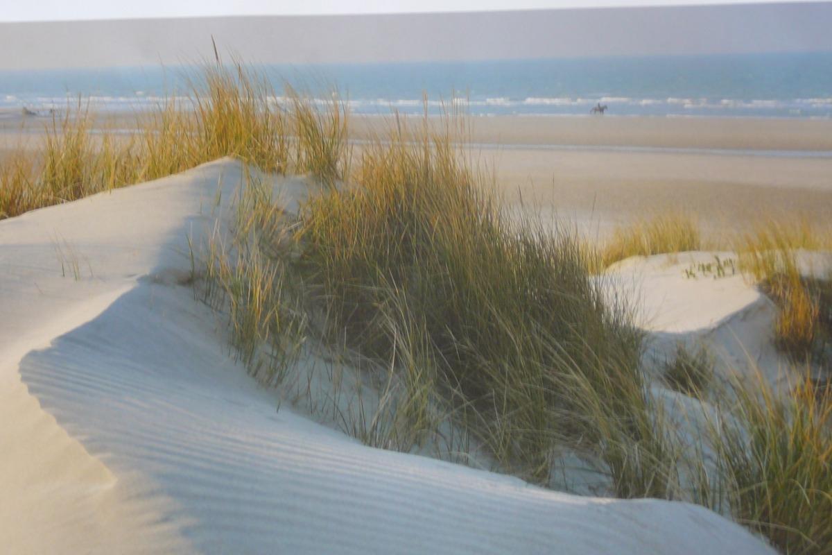 Vue balcon sur mini golf arboré - Location de vacances - Bray-Dunes