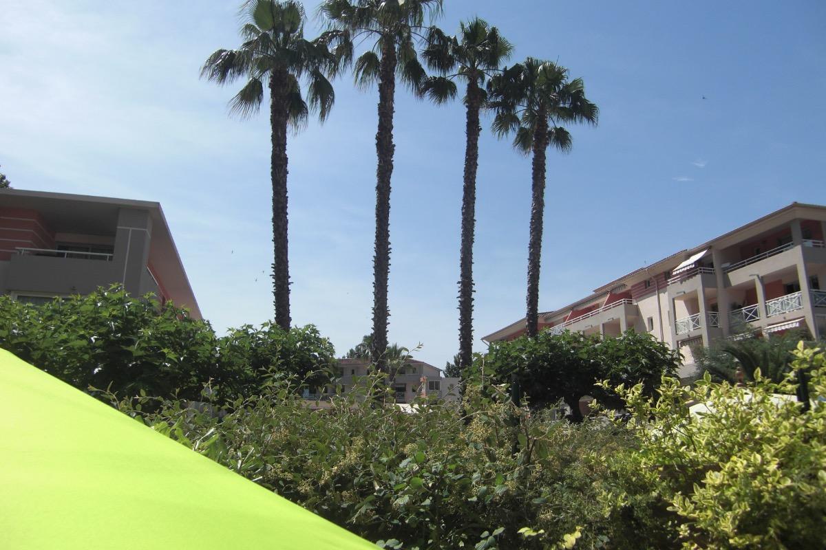 Les grands palmiers de la résidence veillent sur la terrasse - Location de vacances - Cagnes-sur-Mer
