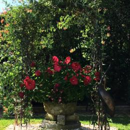 La Valériane- Grasse, jardin - Location de vacances - Grasse