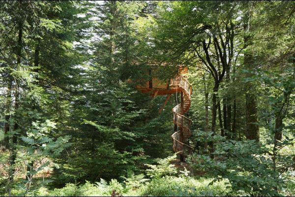 Cabane dans les arbres en Auvergne  - Chambre d'hôtes - La Tour-d'Auvergne