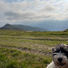 Le Clos Fleuri Lourdes - Studio Glycine Les amis motards - Location de vacances - Lourdes