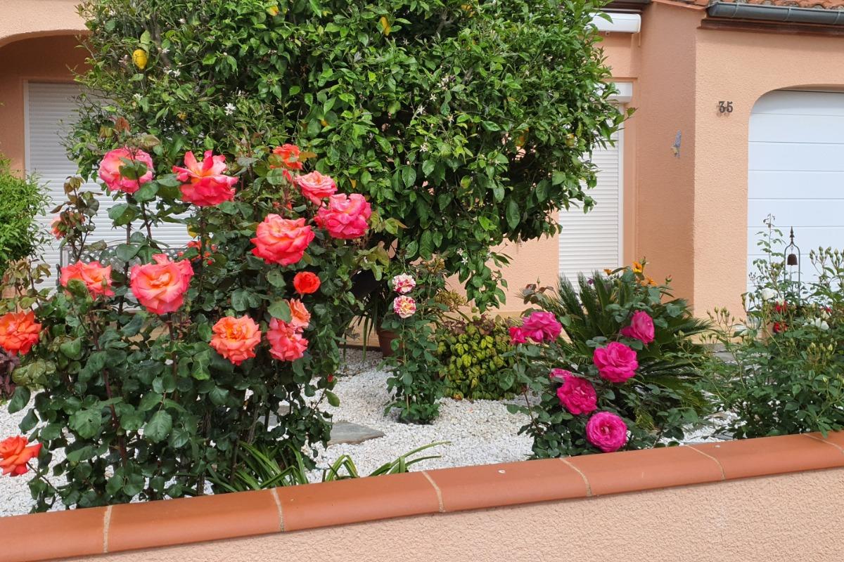 jardin en façade - Location de vacances - Céret