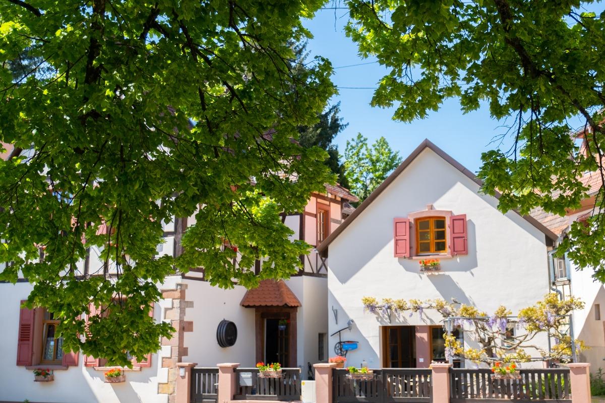 Le gîte et les tilleuls - Location de vacances - Wissembourg