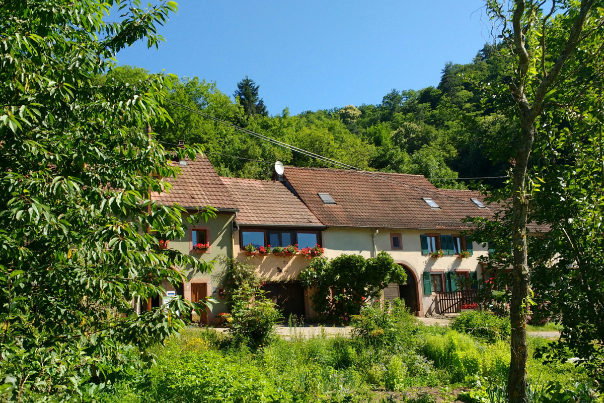 La ferme vosgienne  - Location de vacances - Rombach-le-Franc