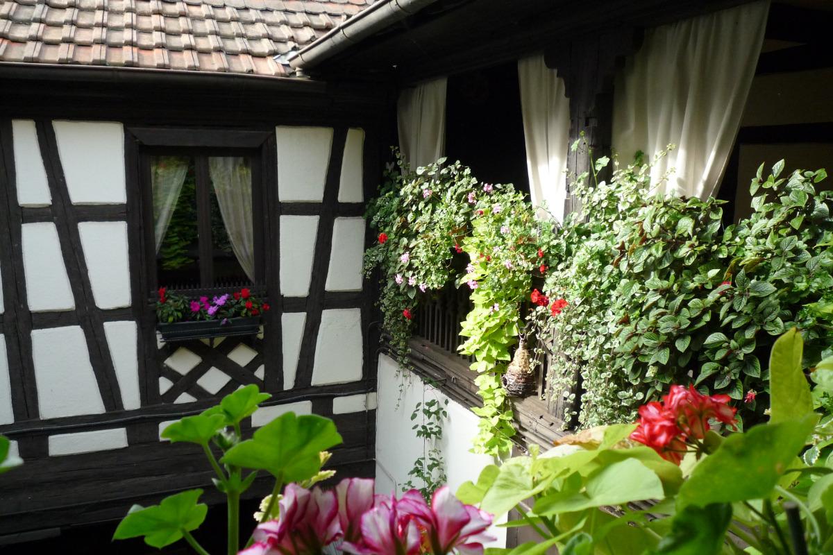 Vue du gîte depuis la coursive d'accès - Location de vacances - Kientzheim