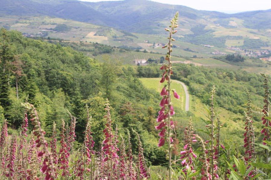 Gîte du haut Bussières - Location de vacances - Vaux-en-Beaujolais