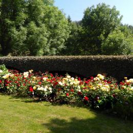 de l'autre côté, le massif de rosiers. - Location de vacances - Meyras