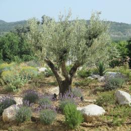 Le jardin et son olivier - Location de vacances - Vogüé