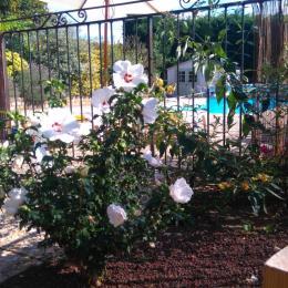 L'espace piscine vu depuis le gîte  - Location de vacances - Eclassan