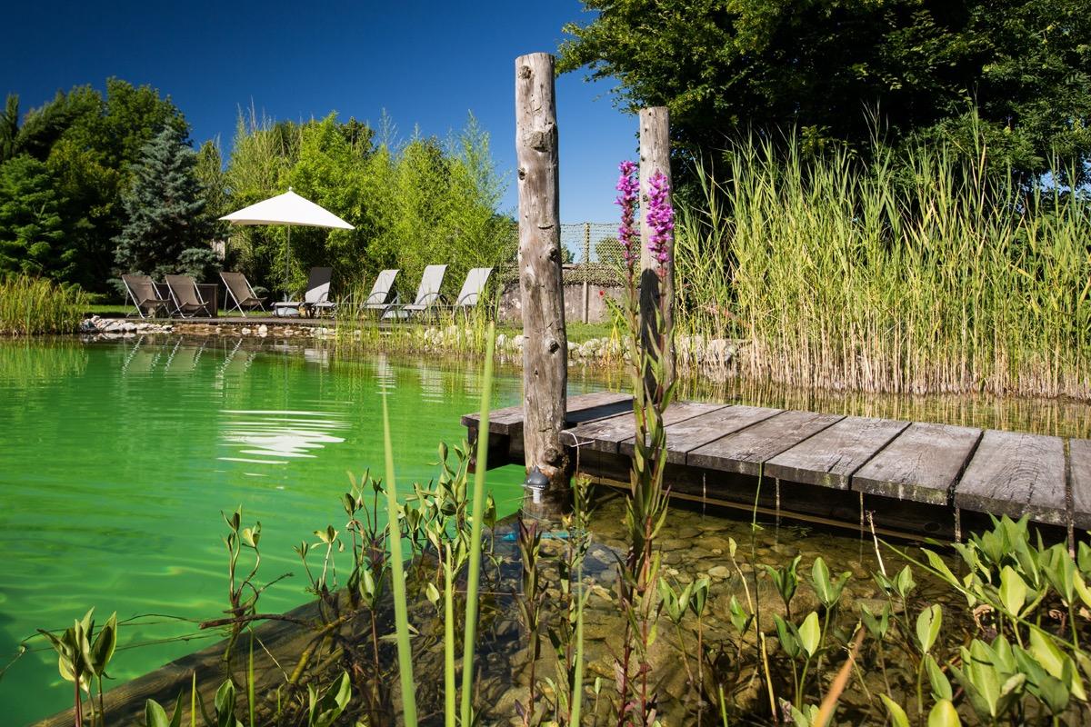 La piscine naturelle - Chambre d'hôtes - Trévignin