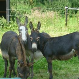nos ânes - Location de vacances - Montville