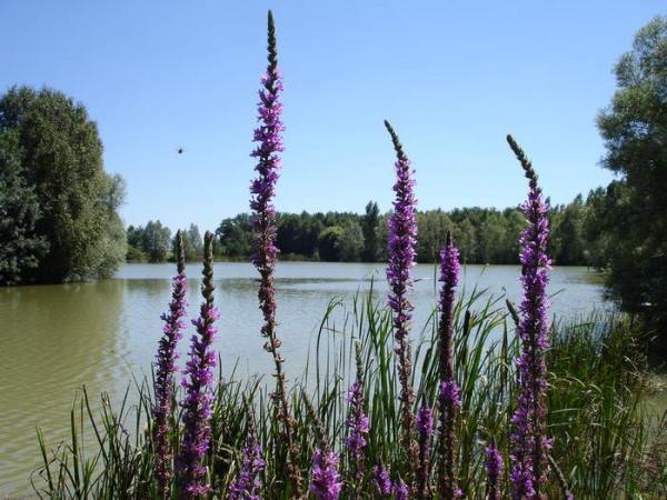 étang de 3ha - Location de vacances - Caunay