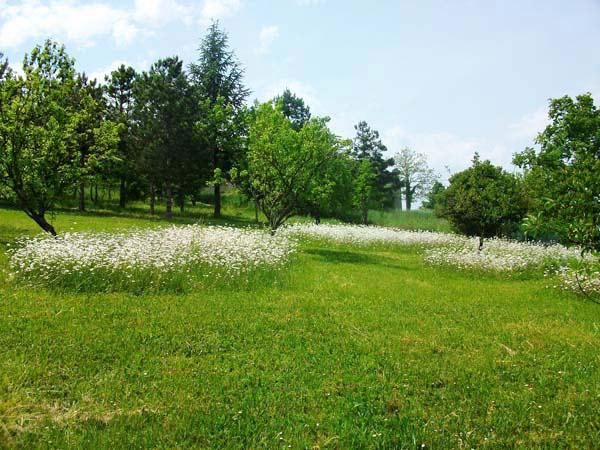 Jardin  - Puygouzon - Tarn - - Location de vacances - Puygouzon