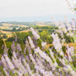 point de vue - Location de vacances - Lautrec