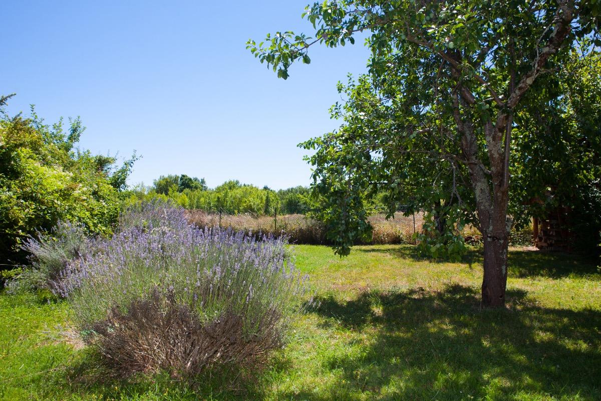 Vue du jardin derrière le gîte - Location de vacances - Ambres