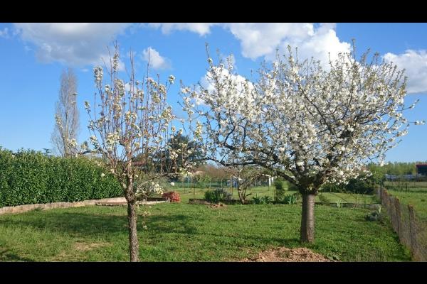 Tarn - terssac arbres fruitiers en fleur - Location de vacances - Terssac