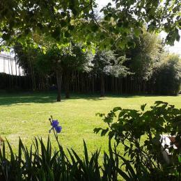 les bambous - Location de vacances - Réalville