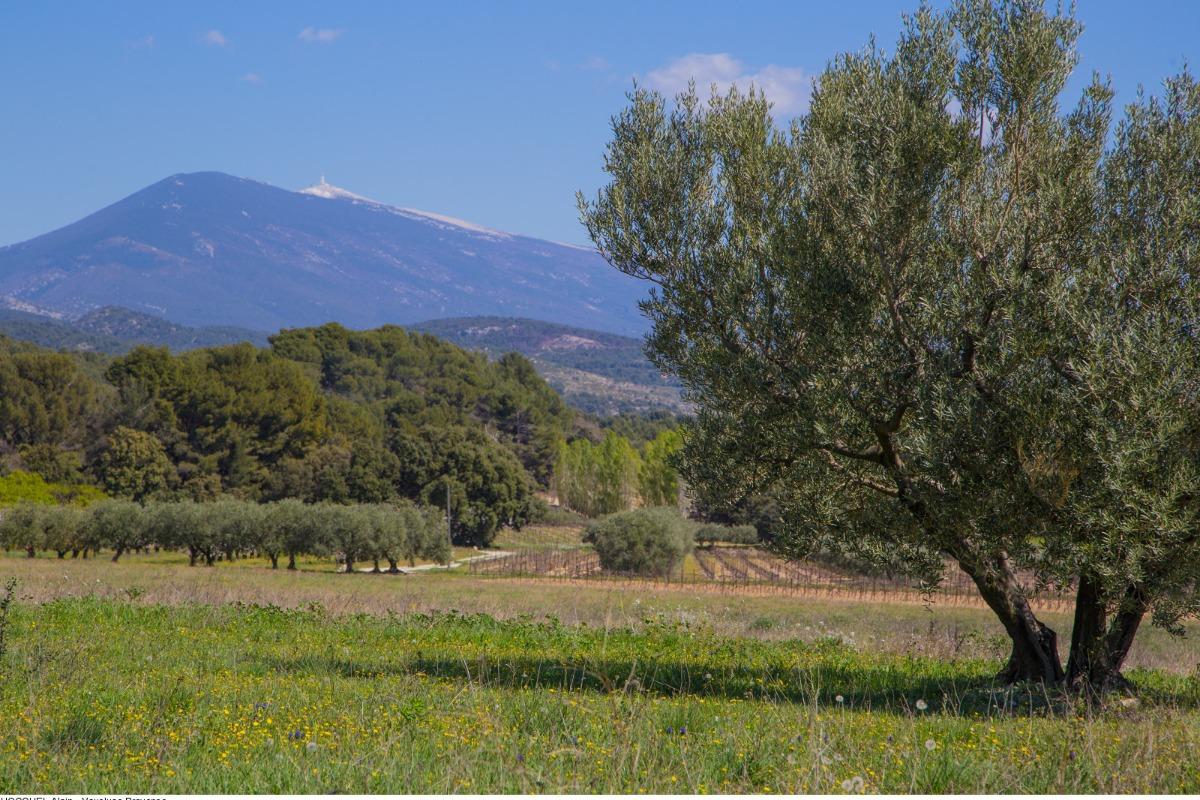 ©AH/VPA  - Location de vacances - Sarrians