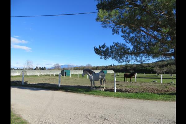 Nos chevaux - Location de vacances - Pernes-les-Fontaines