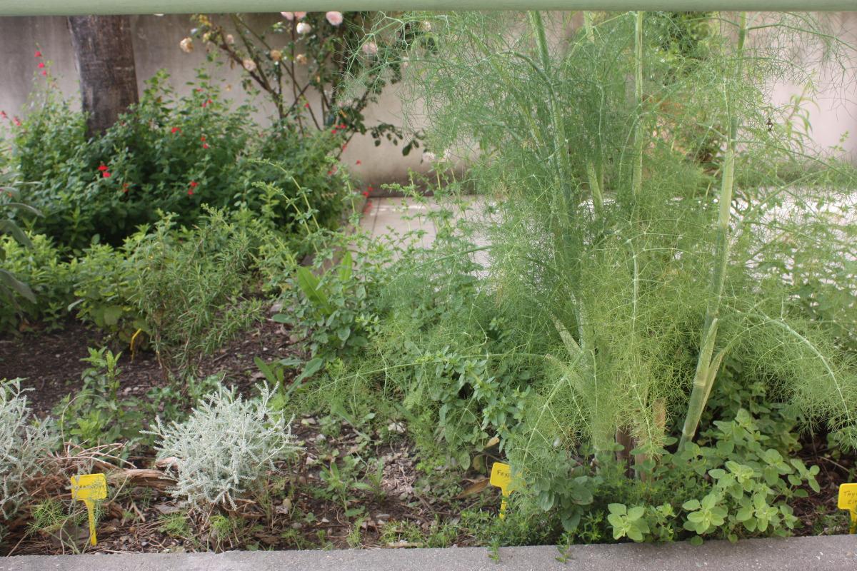Un carré d'herbes aromatiques en bordure de terrasse. Les reconnaitrez-vous ? - Location de vacances - Sorgues