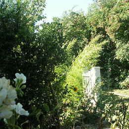 Jardin - Location de vacances - Avignon
