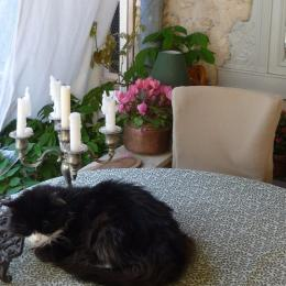 - Chambre d'hôte - Lourmarin