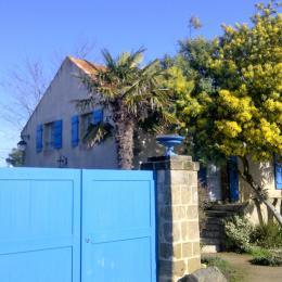 Mimosas et soleil en février - Location de vacances - La Barre de Monts - Fromentine