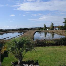 Vue sur le marais,de votre chambre - Chambre d'hôtes - Noirmoutier en l'Île