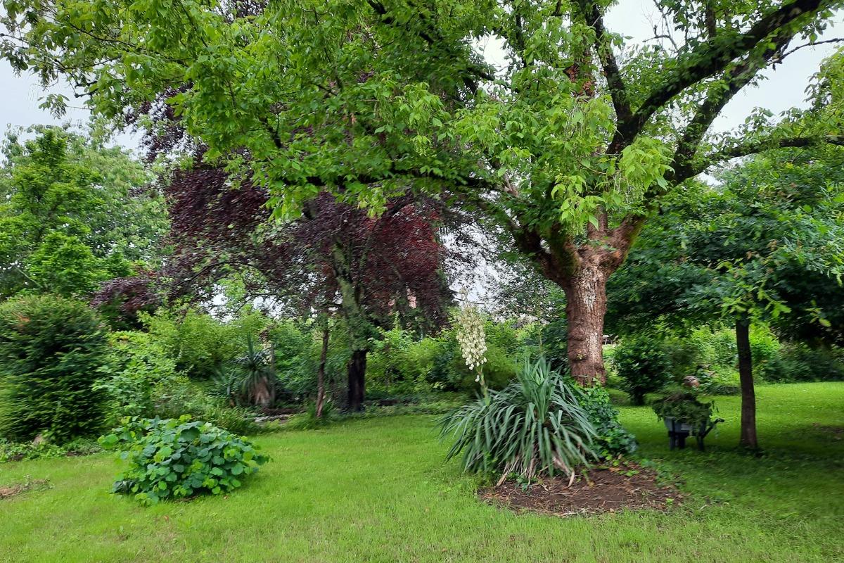 Le jardin secret - Location de vacances - Rochechouart