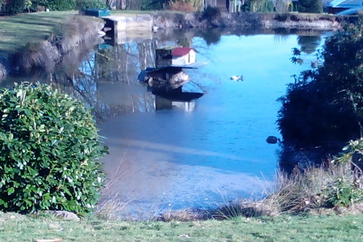 étang à disposition - Chalet la Hutte Baret  - Location de vacances - Raon-aux-Bois