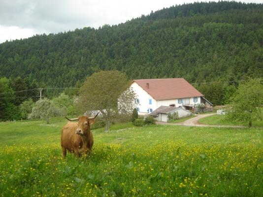 Maison été - Gite à le Girmont Val d'AJol Vosges - Location de vacances - Girmont-Val-d'Ajol