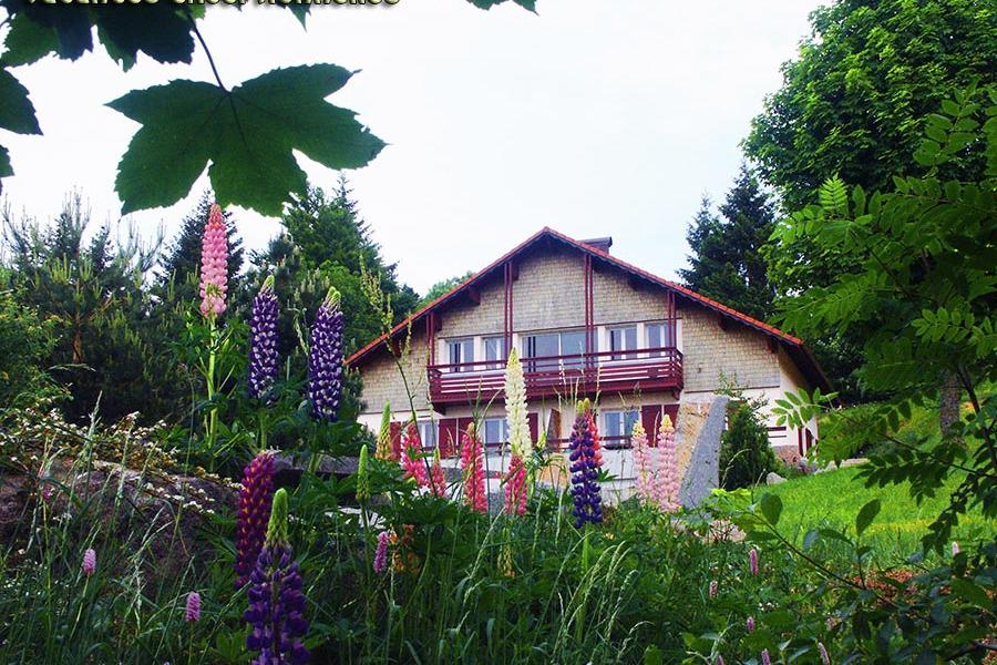 en pleine nature des hautes-vosges - Location de vacances - Gérardmer