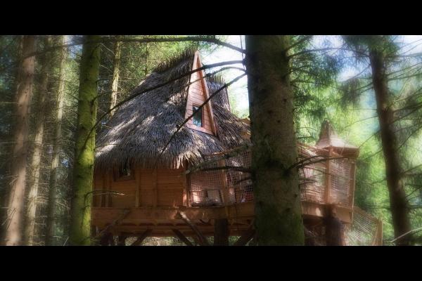 - Chambre d'hôtes - La Bresse