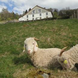 La Ferme et ses chèvres - Chambre d'hôtes - Cornimont