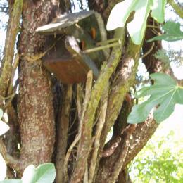 La cabane aux oiseaux, dans le cyprès - Location de vacances - Niaux