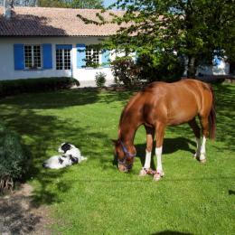 Vigo, Apache et Aglaé vous accueillent - Chambre d'hôtes - Lorp-Sentaraille