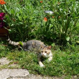 E.T notre petite chatte - Location de vacances - Bagnolet