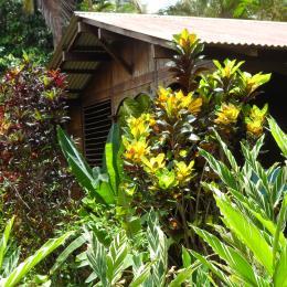 bungalow - Location de vacances -